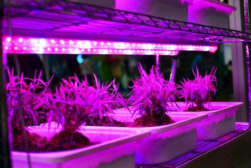 نور مناسب رشد گیاه ریسه ال ای دی